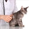 Ветеринарные клиники в Златоусте